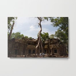 Ancient trees and Ancient Stories Metal Print