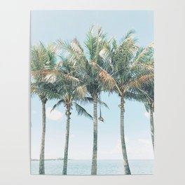 Tropical Palm Trees Poster