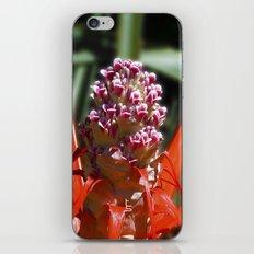 Succulent Blossom I iPhone & iPod Skin