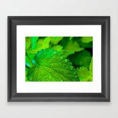 Vibrant Green Leaves Close Up Framed Art Print