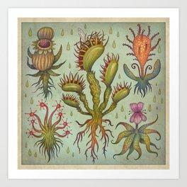 Carnivorous plants Kunstdrucke