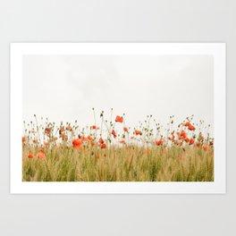 Poppies Coquelicots Art Print