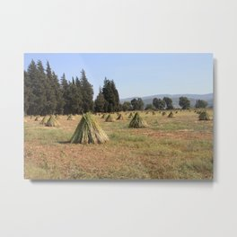 Sesame Crop and Harvest Metal Print