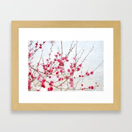 Beautiful Cherry Blossoms at the Imperial Palace in Kyoto, Japan Framed Art Print