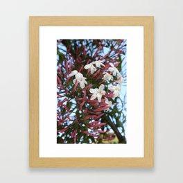 Pink Buds and Jasmine Blossom Close Up Framed Art Print