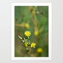 Golden flowers by the lake 1 Art Print