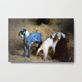 Goat Babies Metal Print