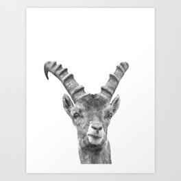 Black and white capricorn animal portrait Art Print