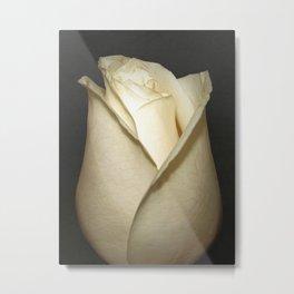 White Rosebud Rose Flower Modern Country Farmhouse Art A416 Metal Print