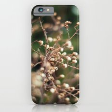 Winter Aster Slim Case iPhone 6s