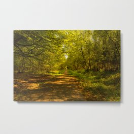 Woodland Views. Metal Print
