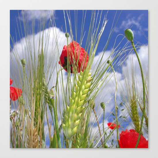 cornfield poppy I Canvas Print