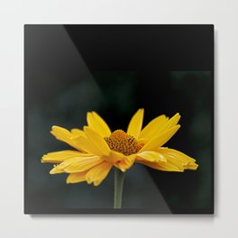 Bright Yellow And Black Metal Print