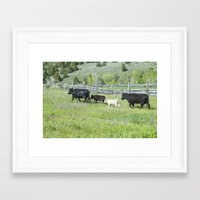 cows Framed Art Prints featuring cows by Julie Luke