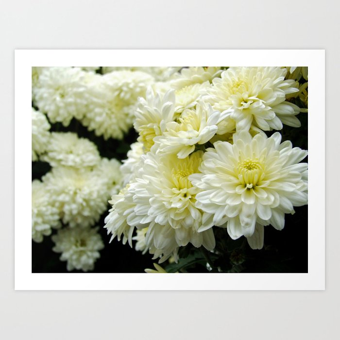White mums ii art print by photographybymichiale society6 white mums ii art print mightylinksfo