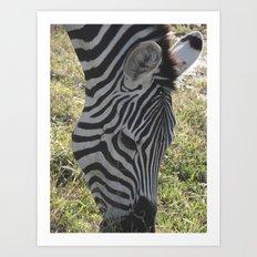 Zebra! Art Print