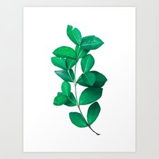 Green Leaves in White background Art Print