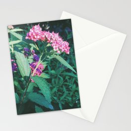 Ceanothus Stationery Cards
