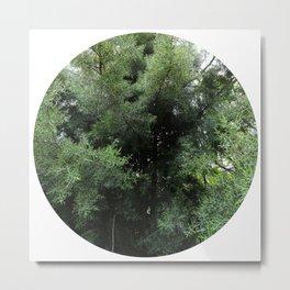Cypress Metal Print