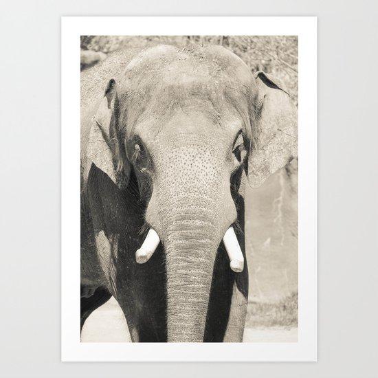 Elephant Charge Art Print