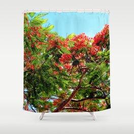 Watercolor Tree Royal Poinciana 01, St. John Shower Curtain