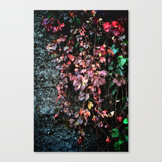 Red Leaf Canvas Print