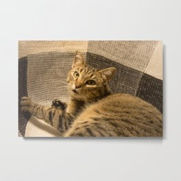 Cat on a chair Metal Print