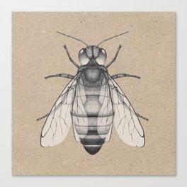Bee pencil drawing Canvas Print