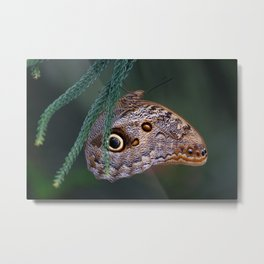 In Pefect Balnce Metal Print