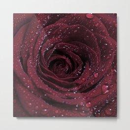 Red Red Rose Metal Print