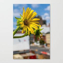 Yellow Flower in NYC Canvas Print