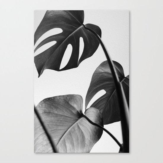 Black & white Monstera Canvas Print