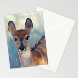 Nyala deer photo Stationery Cards