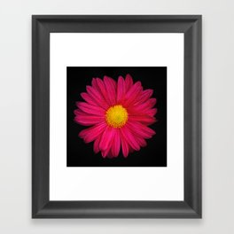 Pink Chrysanthemum Framed Art Print