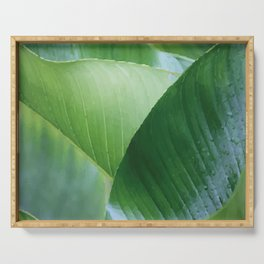 Big Banana Leaves green Serving Tray