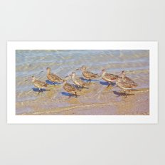 Marbled Godwit Shorebirds Art Print