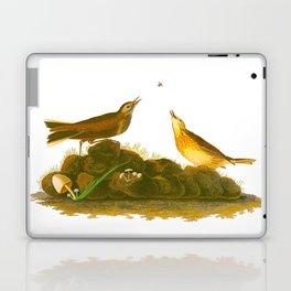 Brown Lark John James Audubon Vintage Scientific Birds Of America Illustration Laptop & iPad Skin