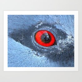 Through an animals eye Art Print