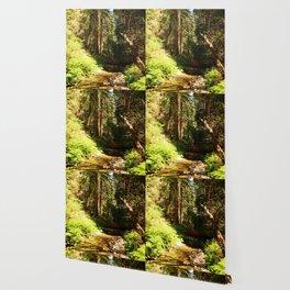 A Muir Woods Scene Wallpaper