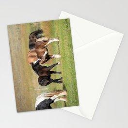 Gypsy Vanner Foals 0371 - Colorado Stationery Cards