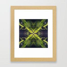 Sword Ferns Framed Art Print