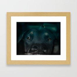 Hungry Benji Framed Art Print