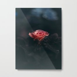Single Pink Rose Bloom In Darkness Metal Print