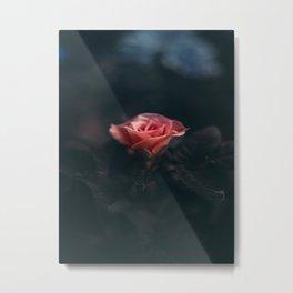 Single Pink Rose Bloom In Darkness Metal Print