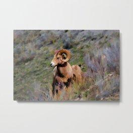 Rocky Mountain Bighorn Sheep Metal Print