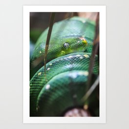 Slither Art Print
