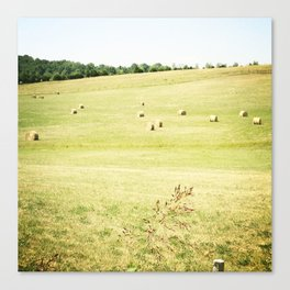 Rolling Hills of Hay Canvas Print