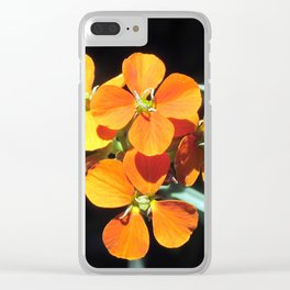 Western Wallflower Steps Out Clear iPhone Case