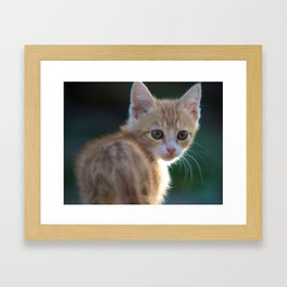 Gatto Rosso - Red Cat Framed Art Print