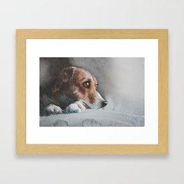 Capella the beagle Framed Art Print